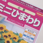 ミニひまわり(小夏)の育て方 Vol.1-種まき